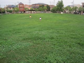 芝生2.JPG